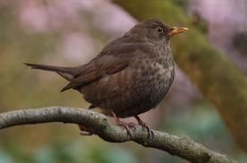 bird-741174_1920