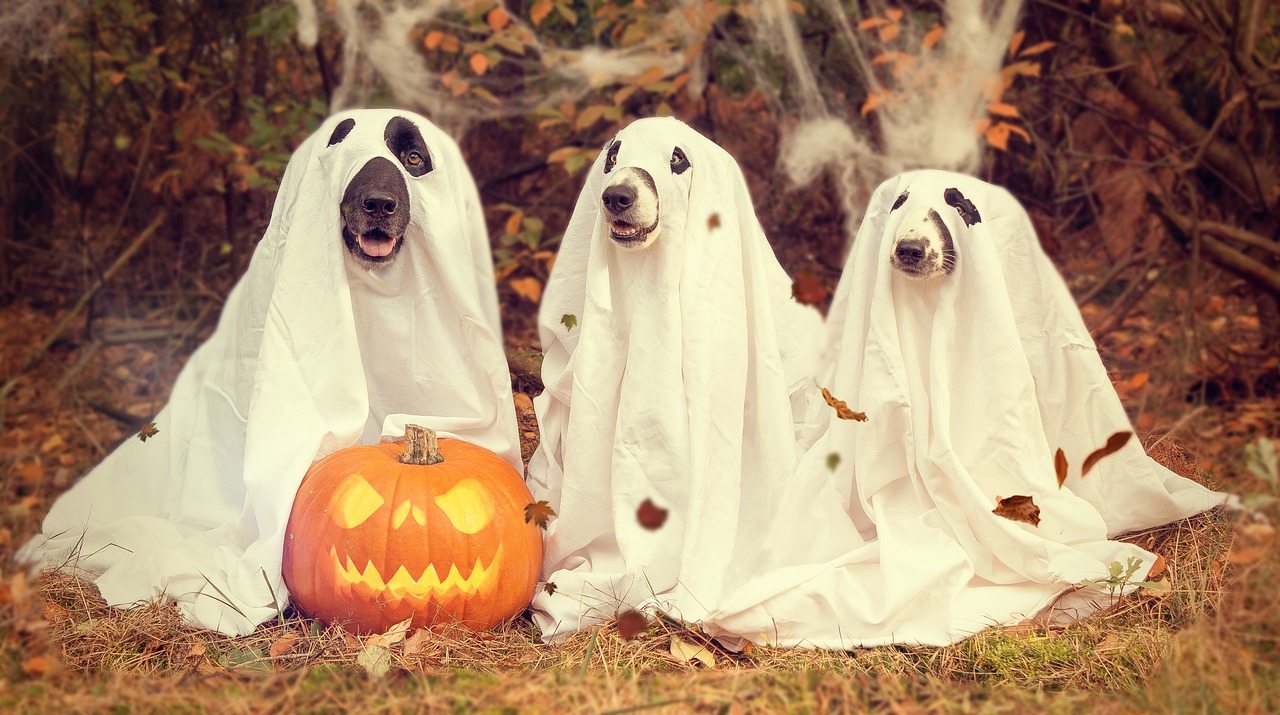 halloween-2870607_1280